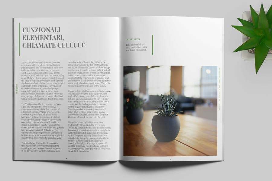 Botanica - Portfolio / Photobook / Brochure - 3