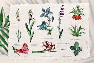 Vintage exotic flowers - botanical set - 0