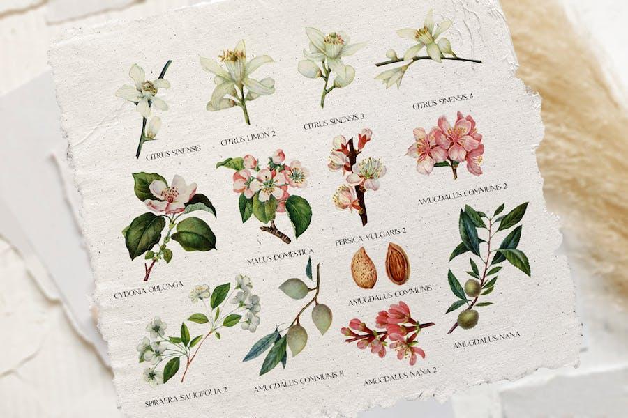 Tender floral botany - vintage illustrations - 0